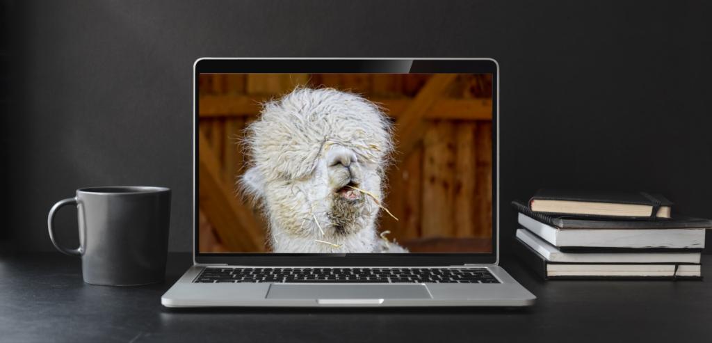 llama virtual meeting
